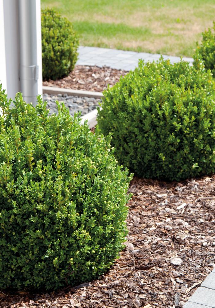 GartenFlora Rindenmulch in der Anwendung