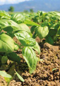 Bevermann Premium und GartenFlora Erden